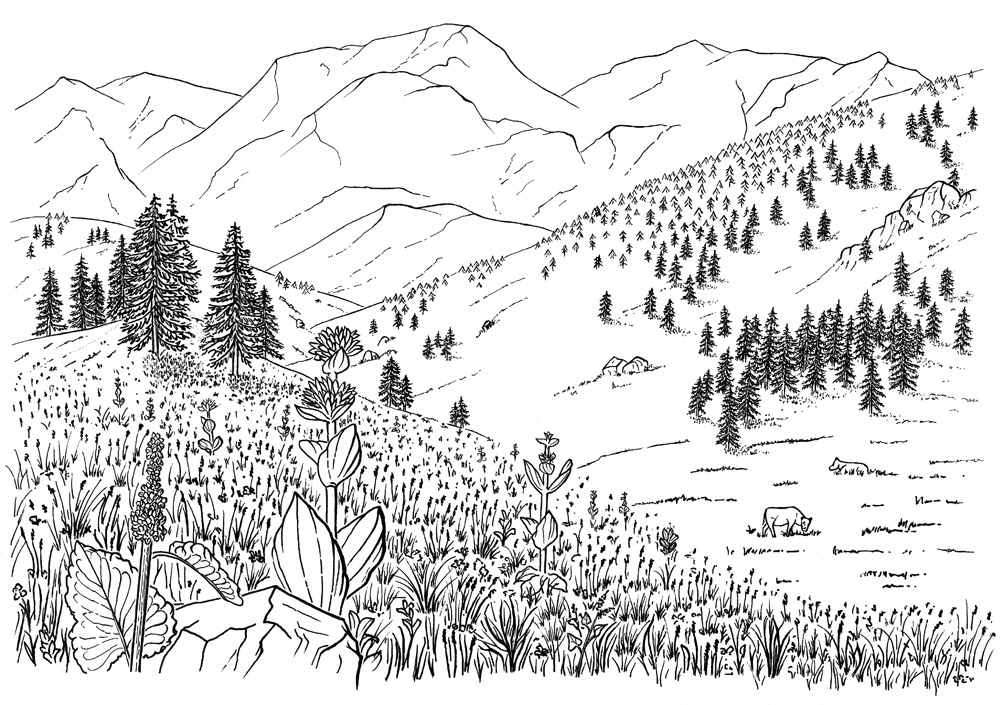 illustration encre chine paysage montagne